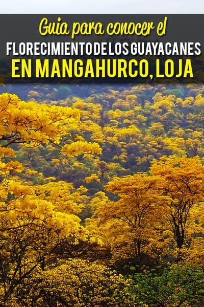 Guia para conocer el Florecimiento de los Guayacanes en Mangahurco, Loja