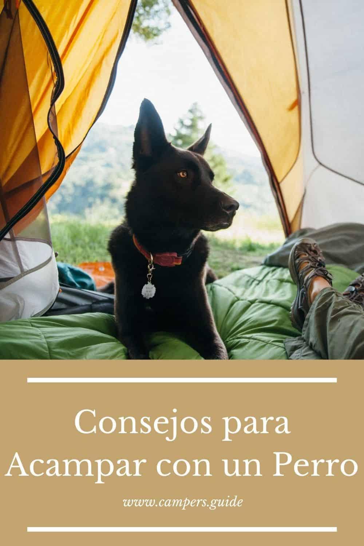 guia para acampar con perros