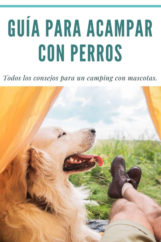 consejos para acampar con perros