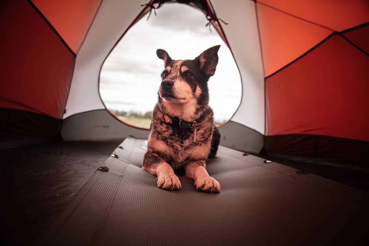 acampar con perros